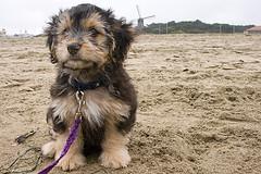 Remy beach windmill via flickr
