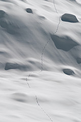 Lynx tracks in snow by chris lombardi via flickr