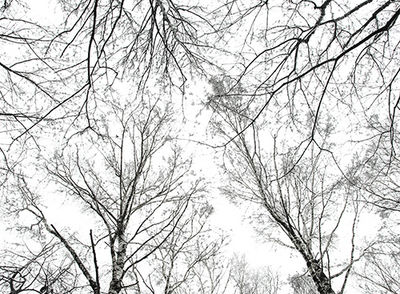 Trees by osvaldru via flickr
