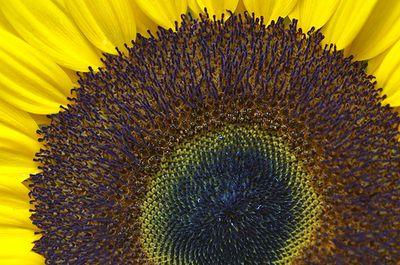 Sunny circles hootowl flickr