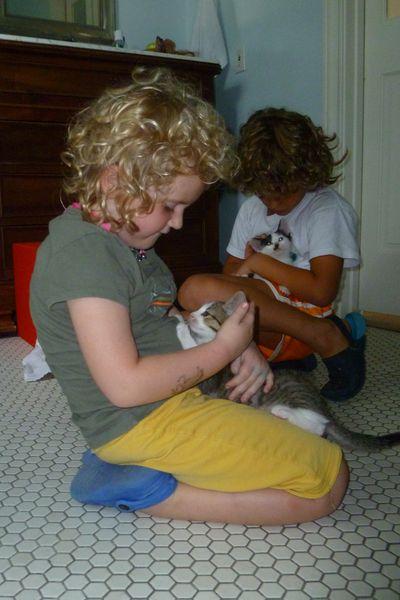 New kittens 810 010