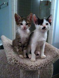 Kittens 810-1