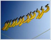Banana_line